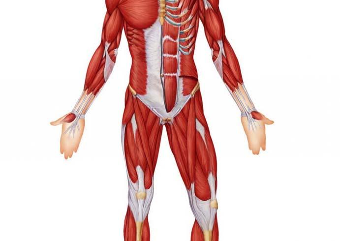 kus infektsioonid on uhised liigesed ja lihased