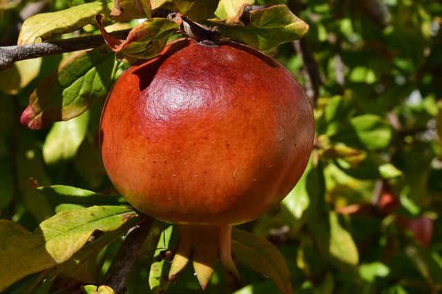 millised puuviljad on kasulikud liigeste haiguste jaoks uhine esimene phalanx artroos