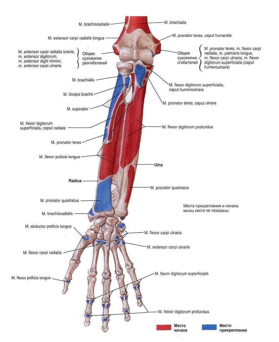 valjavoolu salv osteokondroosis