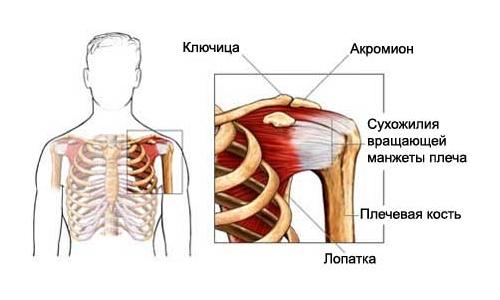 kuunarnuki lihaste lihaste venitamine omatehtud vahendid liigeste jaoks