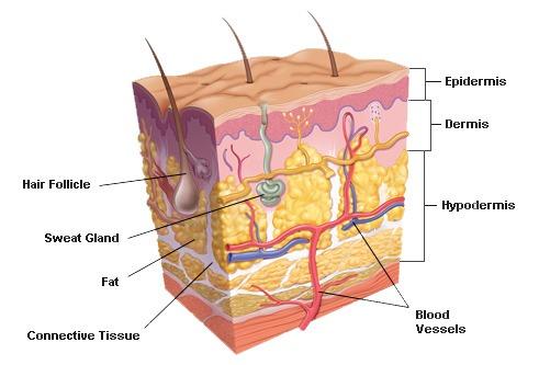 liigeste havitamise haigus