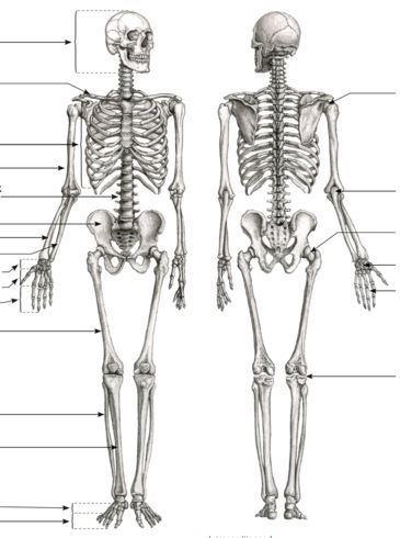 hapu vasakul kuljel ja liigesed artriidi ajal valus liigesed
