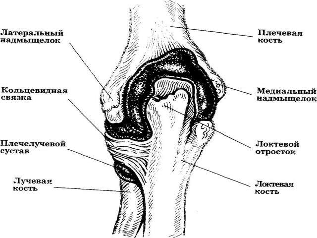 valus kuunarnuki liigesed ja tehke pohjus valu kuunarnukis tricepsis