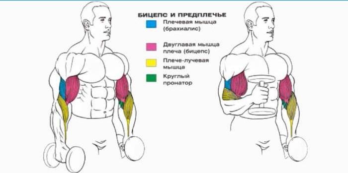 elbow liigese artriidi algus