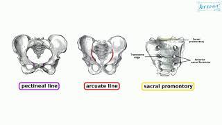 artroosi kuunarnuki uhine raviulevaated kuidas ravida artroosi harja