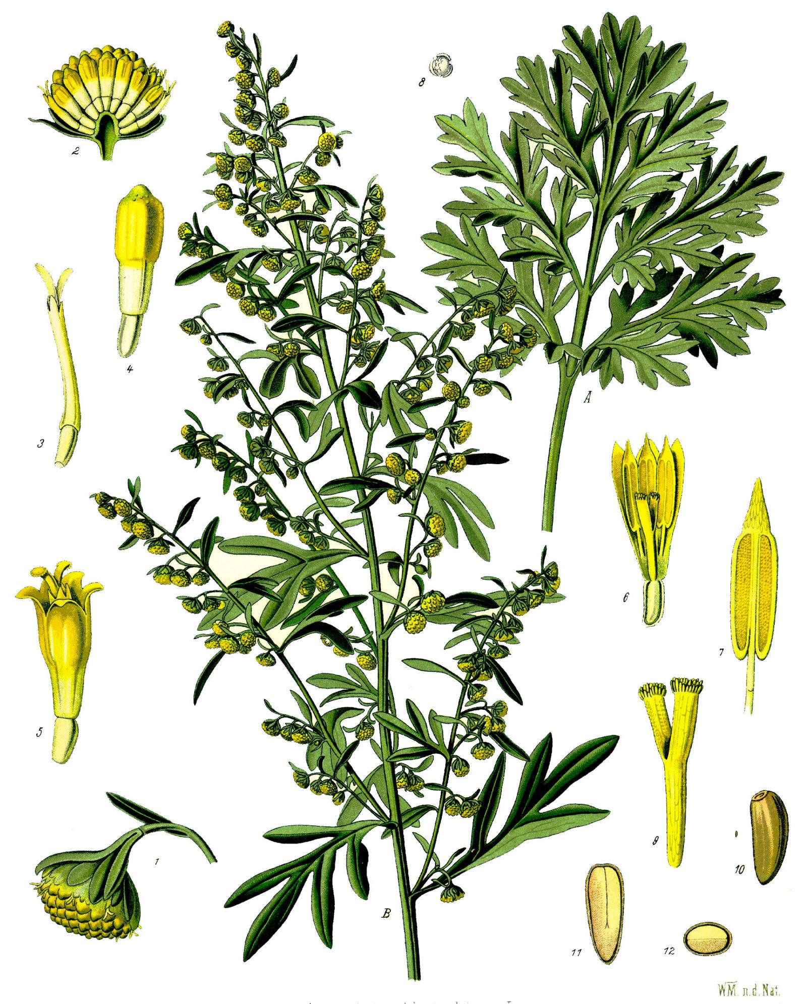 taimede valuga taimed