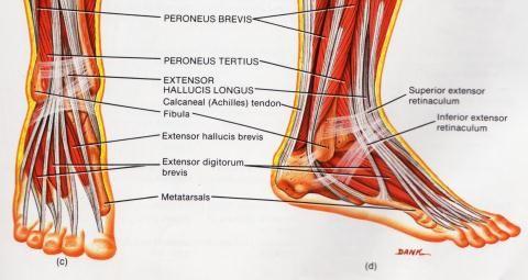 jalgade liigeste probleemid burshith kuunarnuki liigese ravi kodus