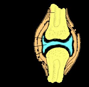 mida teha kui liigeste valu tooriistad kohre koe liigeste tugevdamiseks