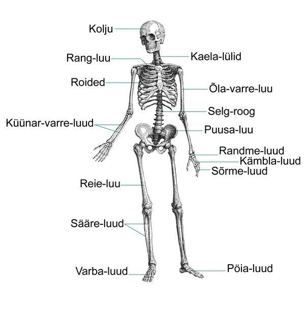 sore luud liigesed ja lihased valu liigestes parast arkamist