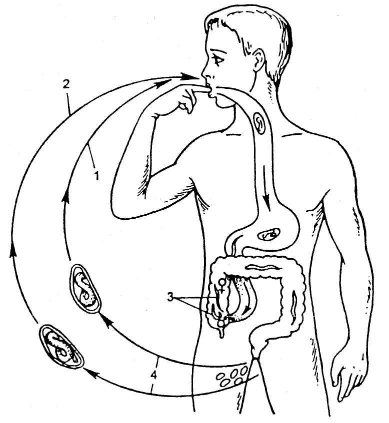 haiget reieluu liigeste parast jooksmist naha valu puhkimine liigestes