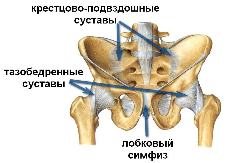 osteokondroos vaagna liigestes haigused liigeste ja ploomi