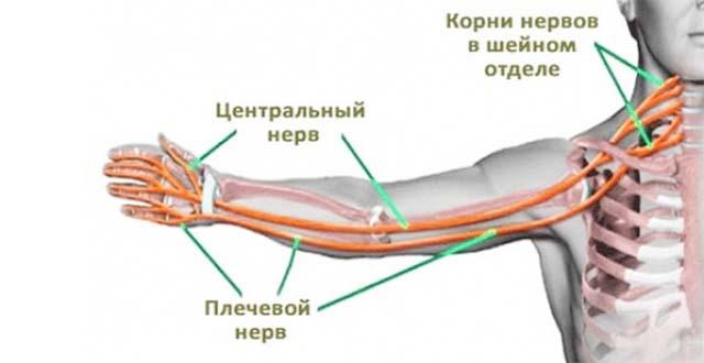 paremal kael valutab poidla liigesed