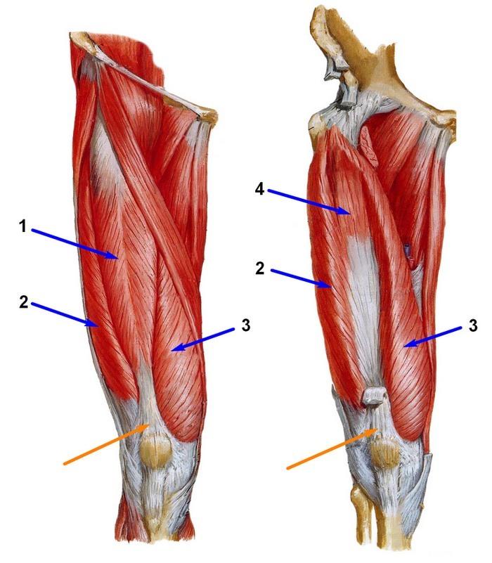 lunari kalender liigeste raviks ola liigese artriit pohjustab ravi