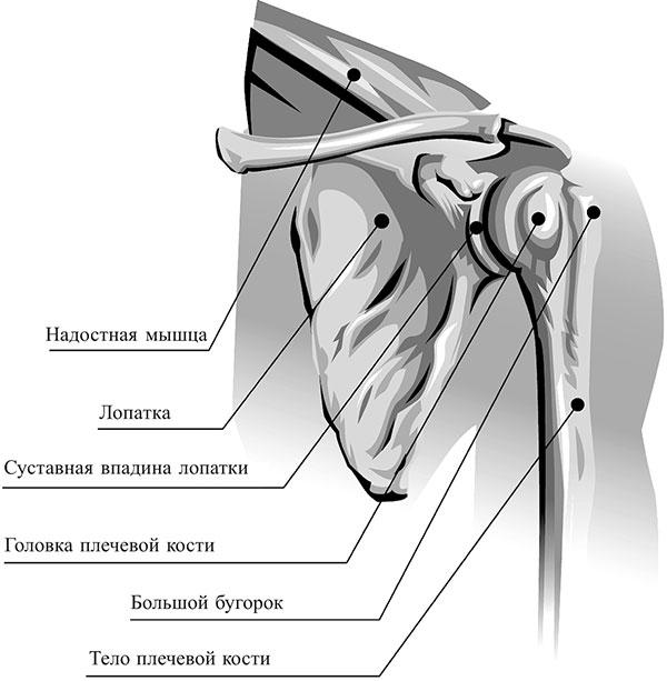 salvi ola liigese artroosi vastu